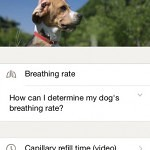 Pet First Aid by American Red Cross iPhone App Review